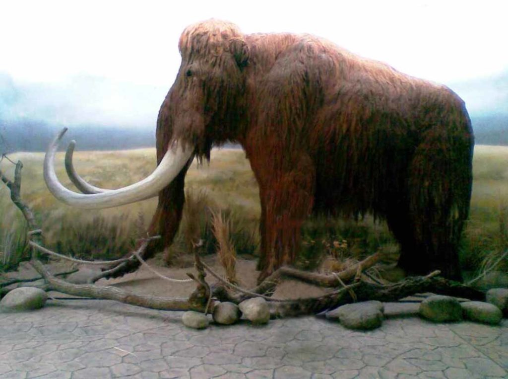 vir3 mamut-elephas-primigenius-2